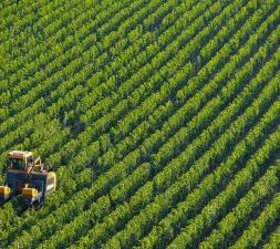 Negocios Agropecuarios
